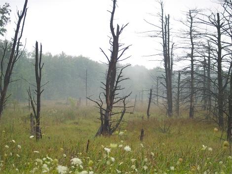 Near Havelock Whisper Trees